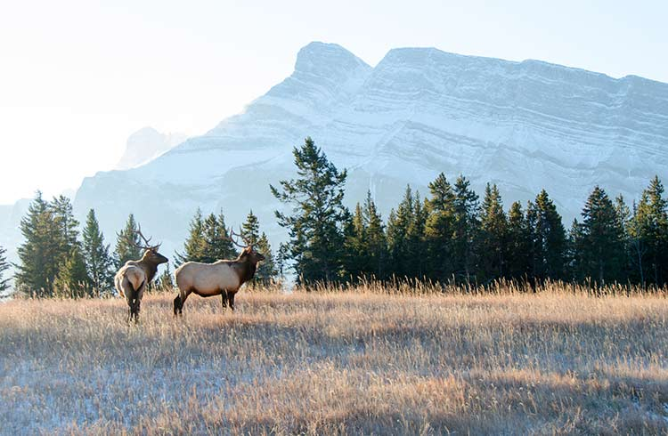 Canada's Top 8 Destinations for Wildlife Encounters