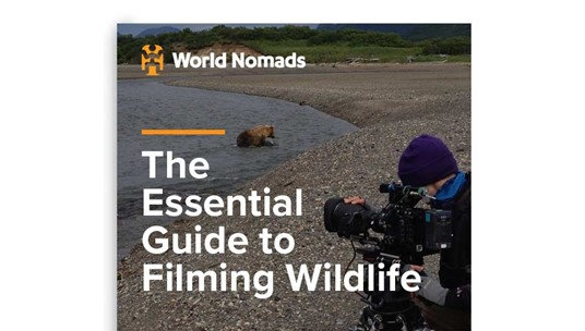 The Essential Masterclass to Filming Wildlife