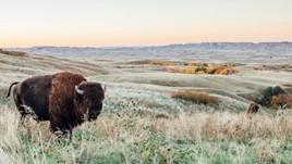 3 Memorable Road Trips Through South Dakota
