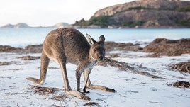 A Guide to Australian Wildlife (That Won't Kill You)