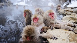 Onsen Etiquette: What Travellers Need to Know