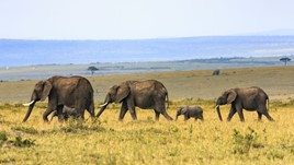 The Essential Guide to Travel Vaccinations for Africa