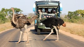 South African Wildlife & Weather: Know Before You Go