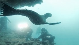 Ecuador Discoveries: Galapagos Islands Diving