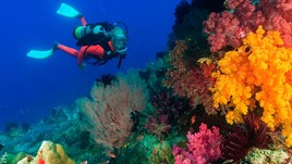 How to Scuba Dive Safely: 20 Essential Tips