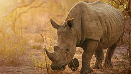 Responsible Tourism: Wilderness Safaris in Botswana