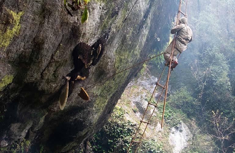 The Death-Defying Wild-Honey Hunters of Nepal