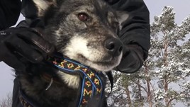 Video: Dog Sledding at the Top of the World