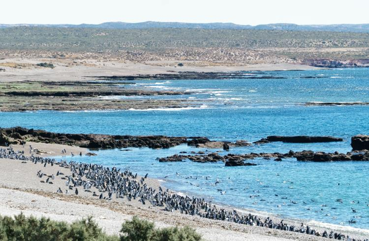 Penguins on the shore of Peninsula Valdes, on the coast of Argentine Patagonia.