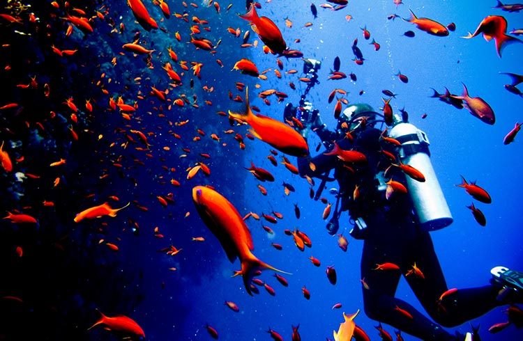 Scuba diving Egypt's Red Sea