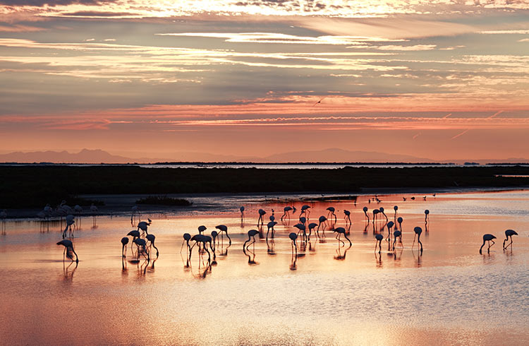 There's No Place Like the Camargue Delta