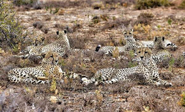 Kwandwe: South Africa's Unsung Wilderness