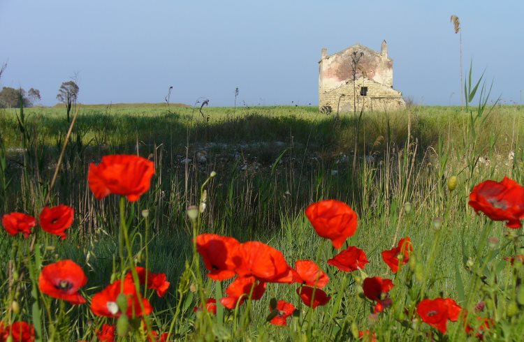 Italy's beautiful rural landscape is dotted with old farms and rustic agriturismi.