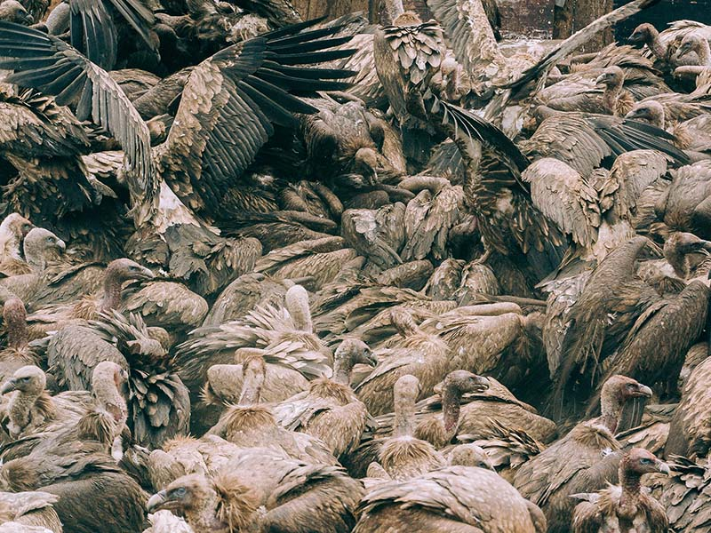 Cloud of spikes and feathers devouring the remains of the corpses.