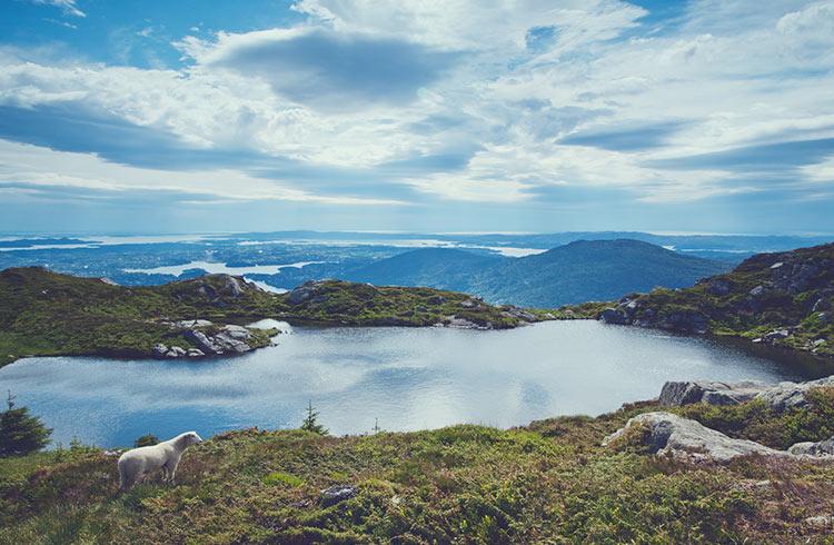 Adventure in Norway: Wildlife and Wilderness Safety